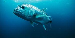снится большая рыба