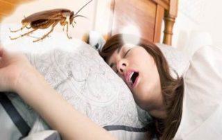 таракан во сне к чему снится