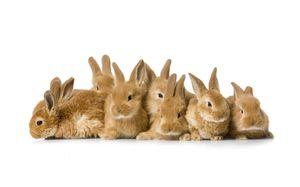 во сне много кроликов