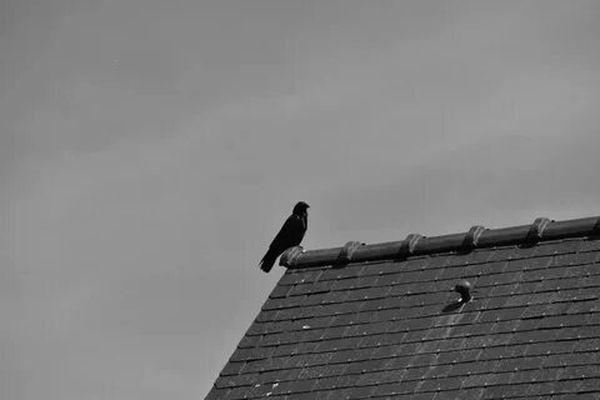 ворон на крыше