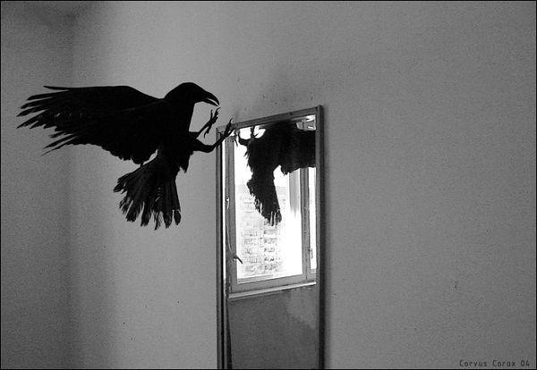 ворон в доме