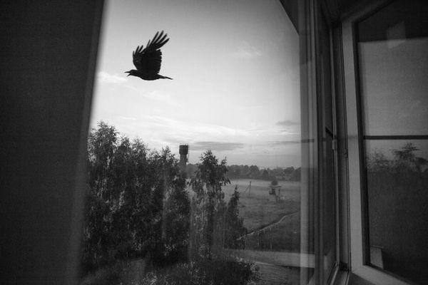 ворон в окне
