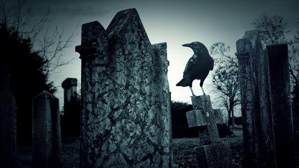 вороне на надгробии